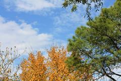 Autumn Sky (TexasEagle) Tags: autumn sky fall clouds colorful texas grapevine autumncolor