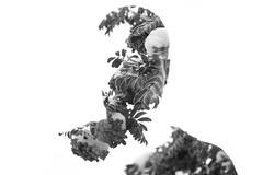 A Man Amongst the Ash (Isaac Hilman) Tags: new portrait blackandwhite selfportrait canada art monochrome nikon doubleexposure experiment multipleexposure creation discovery bold mountainash d800 isaachilman