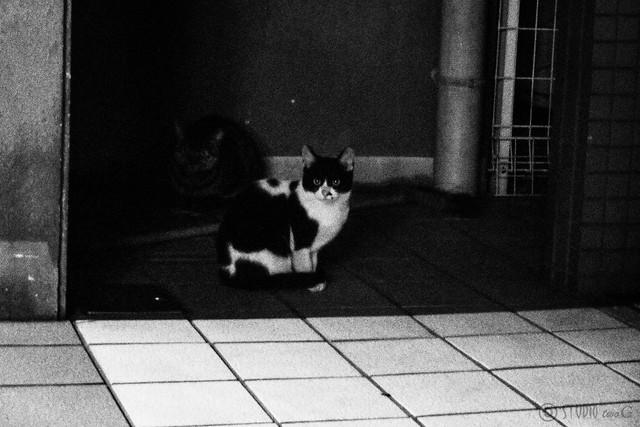 Today's Cat@2012-12-04