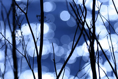 Wilder Ranch Series 6 (jan buchholtz) Tags: ocean california blue light santacruz water branch shine bokeh sillouette glimmer glint shimmer wilderranch