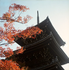 (yocca) Tags: autumn film leaves t temple leaf kyoto dof kodak bokeh 100v10f hasselblad momiji japanesemaple fallen   2012 500cm carlzeiss shinnyodo portra160   plannar nov2012