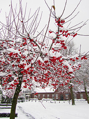 St. Odaschool / Oude Meisjesschool / Helden (rob4xs) Tags: school schnee snow holland netherlands sneeuw nederland thenetherlands schule limburg helden odaschool meisjesschool peelenmaas stodaschool