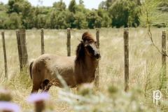 Caballo (-Patt-) Tags: horses horse naturaleza nature animal caballo caballos libertad freedom vegan vegetarian animales veg