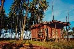 DSC_0092-3 (mohdhanafiah) Tags: tree landscape coconut kitlens malaysia abandonedhouse kelapa rumah terengganu pokok lanskap setiu nikond40 kampungmangkuk mohdhanafiah afsdxnikkor1855mmf35f56gii