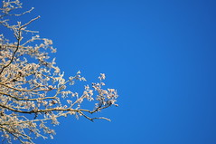 12/12.2012 (julochka) Tags: winter tree frost bluesky postcardtoblogcamp 366the2012edition