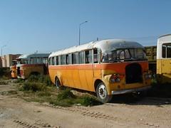 DBY 448 at Kordin (markyboy2105112) Tags: ford v8 448 dby zammit kordin dby448