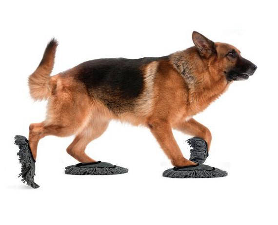 寵物狗拖鞋組合包
