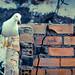 Cambio de hábitat / Habitat change