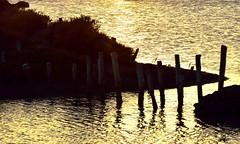 La marisma dorada (ZAP.M) Tags: sunset espaa naturaleza contraluz de atardecer andaluca nikon flickr paisaje cdiz marisma chiclana reflejos carboneros horadorada zapm nikond5300 mpazdelcerro