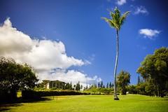 Kapalua Village Walks, Maui (gacrichards) Tags: walks village kapalua villagewalks