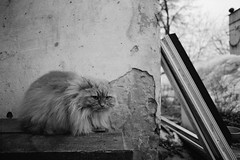 untitled (Anton Zabermach) Tags: blackandwhite bw film analog cat 35mm nikkor ilford fp4 nikonfe2 selfdeveloped microphen 50mmf18ai