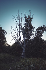 Tree (re-l_mair) Tags: tree summer evening beautiful sunset nature canon eos7d old