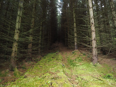 (jesse_the_ros) Tags: scotland aberfeldy obarpheallaidh peairtagusceannrois perthandkinross alba gbr hike explore exploring nature photography hillwalking olympus july summer outdoor wandering robroyway forest trees dark 18mm