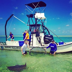 Go share your own pics! #motemarinelab