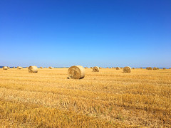 Feld (10.000 Schritte) Tags: feld getreidefeld weizenfeld weizen stroh heu strohballen heuballen sonne himmel blau
