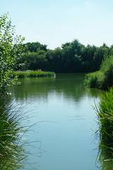 SAM_0845 (Duncan.B) Tags: wwtbarnes wildlife london barnes samsungnx samsung nx10
