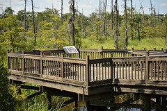 _DSC4611 (holdit.) Tags: tx texas visitorcenter swamp nature natural
