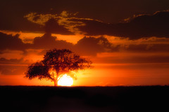 Tree on fire (ScottBennie) Tags: sillouette scenery sunset landscape tree red nature alberta clouds scenic canada rural outdoor orange prairie