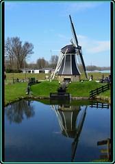 Dutch landscape (1) (Ioan BACIVAROV Photography) Tags: dutch landscape windmill grass reflection reflections water bacivarov ioanbacivarov bacivarovphotostream interesting beautiful wonderful wonderfulphoto nikon