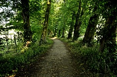 The Green Mile. (Maria .... still trying to find my way!) Tags: path trees tree nature green leaves leading