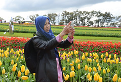 Photo Opportunity 2 (PhotosbyDi) Tags: 2016tesselaartulipfestival people candid tulips nikond600 nikonf282470mmlens photographer selfie