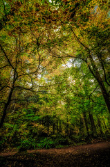 Autumn is Here (Martin Smith - Having the Time of my Life) Tags: crescentpark surrey southsurrey autumn nikond7000 tokina111628 martinsmith ©martinsmith britishcolumbia canada ca landscape forest fall leaves outdoor