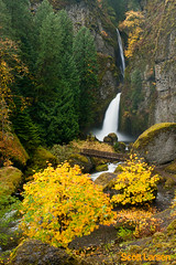 Autumn at Wahclella Falls in the Columbia River Gorge (ScottLarsen) Tags: autumn fall nature leaves oregon scott waterfall leaf or falls fallfoliage foliage gorge larsen columbiarivergorge wahclella nationalscenicarea columbiarivergorgenationalscenicarea wahclellafalls tannercreek scottrlarsen scottlarsen scottlarsencom