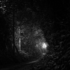 Enchanted Light [Explored] (Martin Mattocks (mjm383)) Tags: trees light blackandwhite mist leaves silhouette mono cornwall shadows pathway enchanted canoneos5dmarkii cornwalllandscapes mjm383 martinmattocksphotography