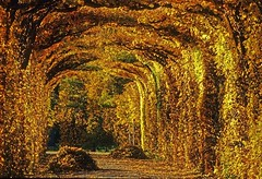 golden way (try...error) Tags: schnbrunn vienna wien camera leica autumn summer colour film analog ed austria golden sterreich nikon focus kodak herbst slide dia slidefilm scan r elite 100 manual 5000 ektachrome manualfocus extra elisabeth autriche sissi r8 80200 diafilm extracolour