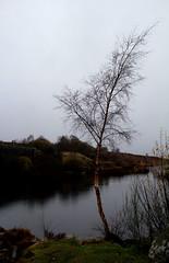 tree by a loch (road rebel 1) Tags: bridge tree wet water landscape scotland view loch waterlandscape landscapephotography scottishlandscape