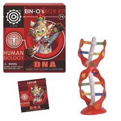 Ein-O DNA