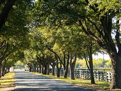 Driveway (pianoforte) Tags: ranch trees dallas driveway tvshow ewing southforkranch dallastvshow ewingfamily parkertx