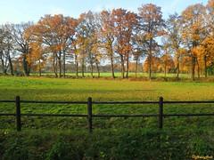 autumn fence at Pesse (HansHolt) Tags: autumn trees grass fence bomen herfst gras hek hff pesse