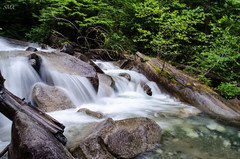 Approaching Whistler (ShurperMario) Tags: trees nature water rio river whistler waterfall agua britishcolumbia cascada