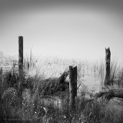 In the weeds (K D Photos) Tags: longexposure bw canada water vancouver canon weeds bc britishcolumbia fineart richmond le pilings fraserriver terranova georgiastrait