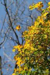 chouettes couleurs offertes par la nature