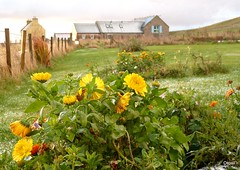 December Flowers In Orkney