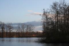 Visvijver Kasseman - Dekshoevevijver (Geel) (Toerisme Geel) Tags: geel vissen 2012 vijver visvijver dekshoevevijver kasseman