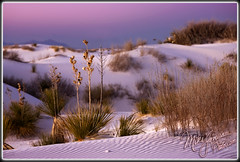 Dusk In The Dunes (MikeJonesPhoto) Tags: newmexico nature landscape 1212 photographer ns scenic professional nm 1365 mikejonesphoto smithsouthwestern wwwmikejonesphotocom