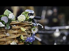 HBW - A Basket of Flowers Edition (PhotoJunket) Tags: flowers cambridge bike bicycle dof basket bokeh 2012 decorated winterfair millroad sigma105mm hbw bokehwednesday