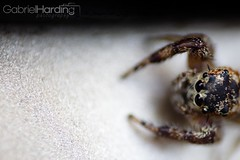 Insects are awesome (Gabriel Harding Photography) Tags: macro nature cool spiders bees details creative insects ants
