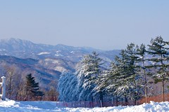 Winter wonderland at Hyundai Sungwoo Resort, South Korea (UweBKK (α 77 on )) Tags: mountain snow ski ice sport sony south korea resort alpha dslr hyundai 550 winterbeauty wonju gangwon sungwoo earthasia