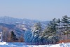 Winter wonderland at Hyundai Sungwoo Resort, South Korea (UweBKK (α 77 on )) Tags: mountain snow ski ice sport sony south korea resort alpha dslr hyundai 550 winterbeauty wonju gangwon sungwoo earthasia