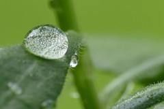 Wassertropfen (thorstenhelmchen) Tags: waterdrop wassertropfen marumi macro lumixfz1000