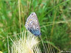 Butterfly 982 (+310000 views!) Tags: butterfly borboleta farfalla mariposa papillon schmetterling