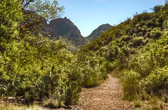 The Window trail in Chisos Mountain