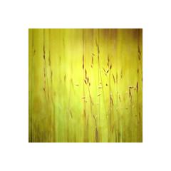 Nature (-Simulacrum-) Tags: nature texture art artistic creative warm serene nikon nikond5300 nikonphotography flickrnature dof depthoffield soft 50mm 500mmf18 nikon5omm photoborder square grass plant outdoor park beautifulnature summer