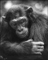 1464444075 (JIMME HANE AHMMED) Tags: jimmehaneahmmed kate labu ali photographar beautifull nice nud