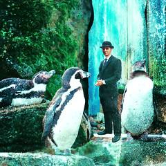 Humboldts plus one (Lemon~art) Tags: humboldt penguin man surreal manipulation texture photomontage