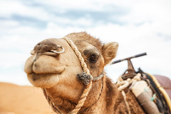 PUPA Desert Expedition 2016-01-05 (tine_stone) Tags: 2016 africa afrika expedition jnner kalendershooting landschaft marokko pupa pupadesertexpedition pantrucksat winter wste desert limitededition onlocation people team tine tinefoto kasbahmoyahut marokko|morocco morocco